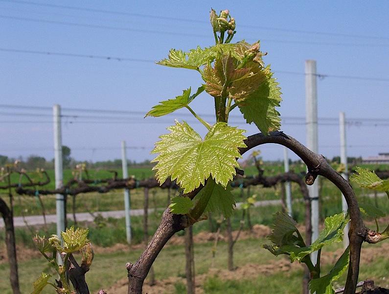 vini da agricoltura biologica certificata