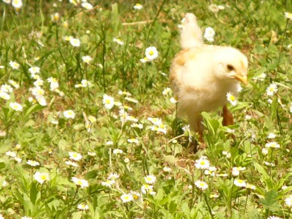 Terra dei Dogi in Festa: è primavera a Portogruaro!