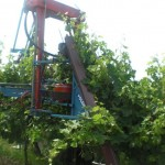 gestione del verde a Le Carline