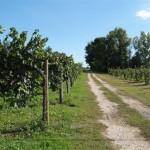 le strade del vino