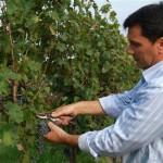 vino biologico Le Carline