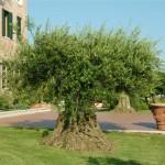 giardino-laguna-venezia