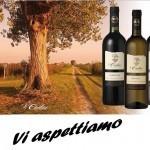 vini senza solfiti aggiunti Le Carline